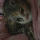 探しています。迷い猫 可児市 ご協力お願い致します。