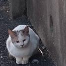 4.5か月位の三毛猫ちゃん(女の子) 里親探してます。