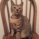 甘えん坊のかわいいキジトラ猫ちゃん