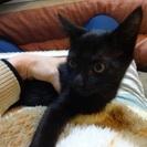 お家を守護するバステト神似の黒猫