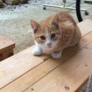 ペルシャ系統のMIX、フワフワの仔猫ちゃんです。