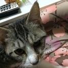 姉妹の子猫ちゃん
