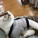 日本一!甘えん坊!小学生みたいな猫!