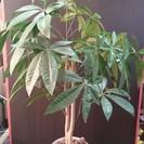 観葉植物 造花 パキラ