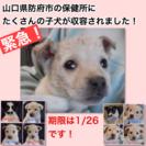 防府市の保健所にたくさんの子犬が収容されました!