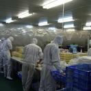 時給1000円 食品工場内作業 短期アルバイト 株ふか河