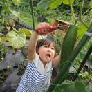 【シェア畑 藤が丘】手ぶらで行ける、有機・無農薬栽培の貸し農園!新...