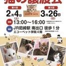 JR尼崎で猫の譲渡会を開催します♪