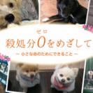 殺処分ゼロ‼︎ 犬 保護活動🐶