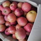 長野産リンゴ 約20㌔! ジャム&加工用限定品 3箱