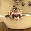 フェレットちゃん わんちゃんの お風呂