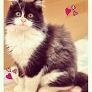 可愛い子猫の兄弟