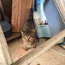 可哀想な迷い子猫チャンを…
