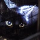 黒猫雌 生後7か月齢