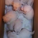生後2ヶ月ぐらいの子犬たちです!