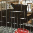 モフリン黒猫1歳の男の子
