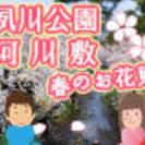 春だ!桜だ!夙川公園でポカポカお花見デート♪