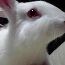 ウサギミュージックスクール   結婚式、お誕生日会、忘年会などでサ...