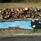 雑木ミックスあげます。 薪 、バーベキュー、家具作りなどにいかがですか?