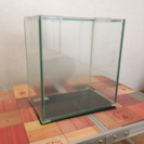 ☆値下げ☆ガラス水槽(23cm)