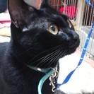 お留守番OK!甘えん坊の黒猫♂です。