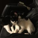 飼育放棄により2匹保護。