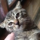 11月生まれの子ネコ2匹の里親さん募集