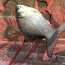 釣り好きが集まる飲み会♪( ´▽`)