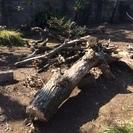 庭木の剪定および伐採したものを差し上げます