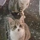 瑞江駅の子猫里親募集です