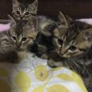 ※里親募集一時停止※2ヶ月の子猫3匹