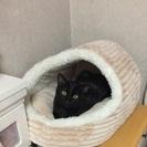 【募集一次停止・交渉中】甘えん坊な8ヶ月の黒猫さん♂