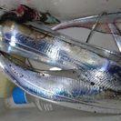 太刀魚浮き釣り仲間