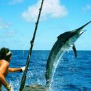 🐟釣り友募集🐟