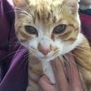 6ヶ月の捨て猫を保護しました。
