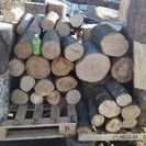 薪に!カシの玉切り丸太(長さ35センチ前後)。平成29年1月下旬伐...