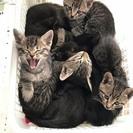 殺処分寸前だった2ヶ月未満の子猫たちです。