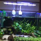 水草用アクアリウムライト