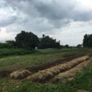 農業ボランティア募集