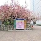4/12 桜祭り🌸イベントスタッフ大募集~♪日払い可能!