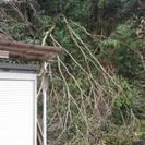 大きな木の枝が落ちてきて困っています。