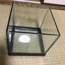 20センチ角正方形水槽