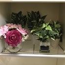 【お店/Airbnb/自宅に】観葉植物の置物