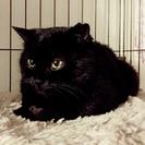 黒猫モフ一歳の女の子