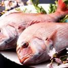 3月11日《福岡》定員50名 魚会 ~魚男で食す春を彩る桜鯛~