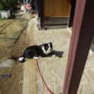 ボーダーコリー 6ケ月の子犬
