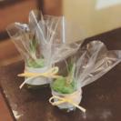 【野庭なごりの】苔玉&盆栽教室 - 教室・スクール