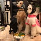 手作り犬ご飯のお教室