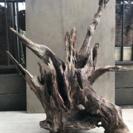 流木•木の芯