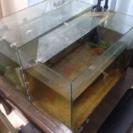 金魚(琉金3匹) 水槽、フィルター等、一式付けます